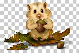 Rodent Red Squirrel Chipmunk Tree Squirrel PNG