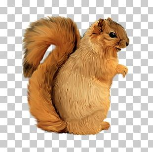 Squirrel PhotoScape Computer Icons PNG