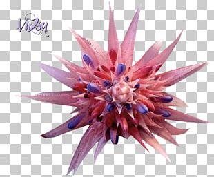 Purple Flower Violet Petal Plant PNG