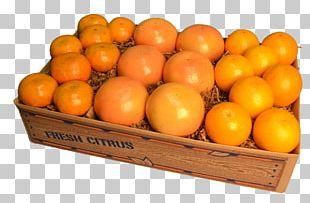 Clementine Tangerine Mandarin Orange Tangelo Grapefruit PNG