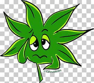 Kush Cannabis Sativa Leaf PNG