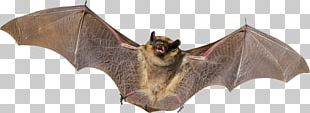 Bat Animal Bird Flight Mammal PNG