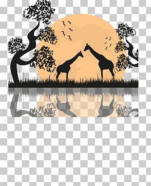 West African Giraffe Northern Giraffe Landscape PNG
