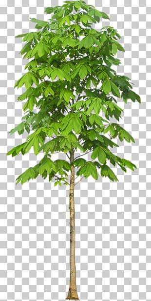 Stock Photography Tree PNG