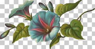 Cut Flowers Painting Floral Design Drawing PNG