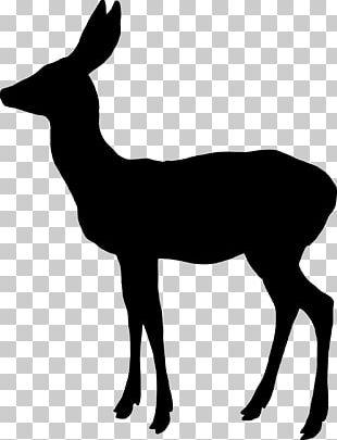White-tailed Deer Reindeer Elk Moose PNG