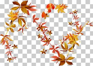 Autumn Leaves Flower PNG