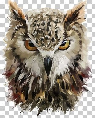 Owl Drawing Painting PNG