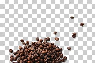 Coffee Bean Cafe Cocoa Bean PNG