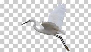 Crane Bird Flight Egret Wing PNG