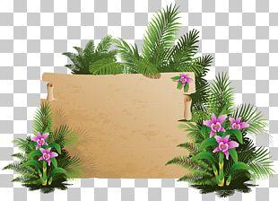 Beach Cdr Grass PNG