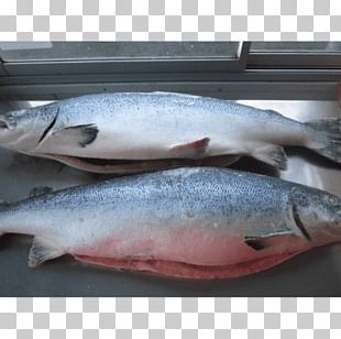 Atlantic Salmon Salmonids Fish Products PNG