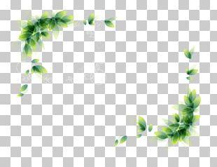 Border Watercolor Leaves Leaf PNG