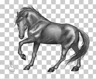 Standing Horse Drawing Grayscale PNG