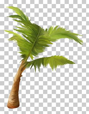 Arecaceae Asian Palmyra Palm Coconut Plant Tree PNG