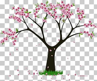 Flower Woody Plant Tree PNG