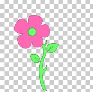 Petal Cut Flowers Floral Design Rose Family Plant Stem PNG