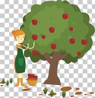 Apple Fruit Picking PNG
