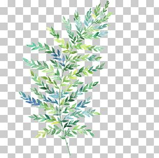Watercolor Painting Leaf Fern Botanical Illustration PNG