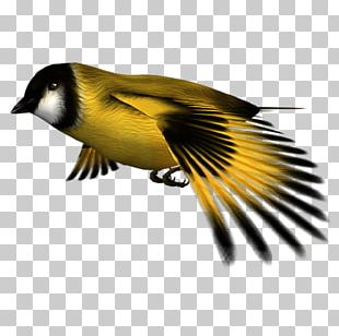 Finches Atlantic Canary Computer Icons Desktop Environment PNG