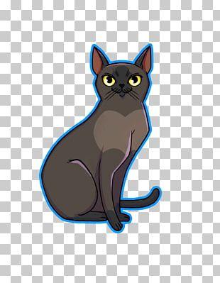 Korat American Wirehair Whiskers Kitten Black Cat PNG