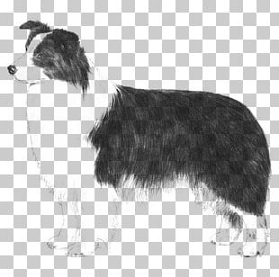 Smooth Collie Png Images Smooth Collie Clipart Free Download