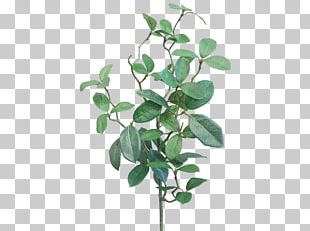Branch Leaf Gardenia Plant Stem JMC Floral PNG