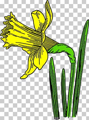 Daffodil Flower Black And White Drawing PNG
