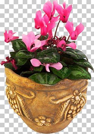 Flowerpot Cyclamen Floral Design PNG