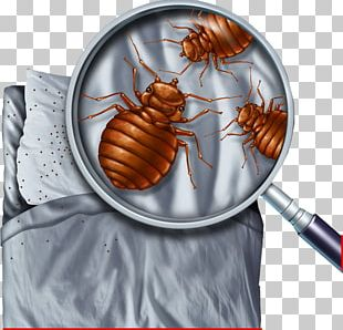 Bed Bug Control Techniques Pest Control Bed Bug Bite PNG