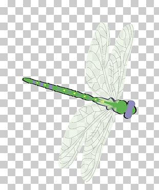 Butterfly Green Feather Moth Pattern PNG