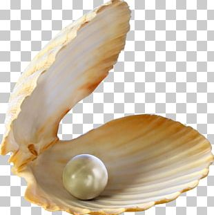 Oyster Pearl Seashell Stock Photography PNG