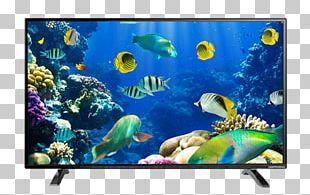 Desktop Ocean Marine Life Underwater Sea PNG