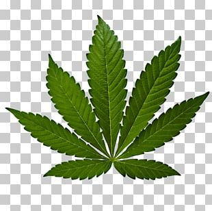 Marijuana Cannabis Sativa Cannabis Ruderalis Medical Cannabis PNG
