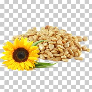 Sunflower Seed Common Sunflower Bird Food Horse PNG
