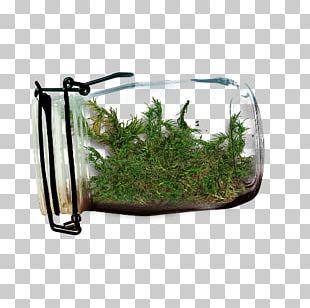 Glass Bottle Glass Bottle Jar PNG