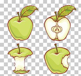 Apple Adobe Illustrator Illustration PNG