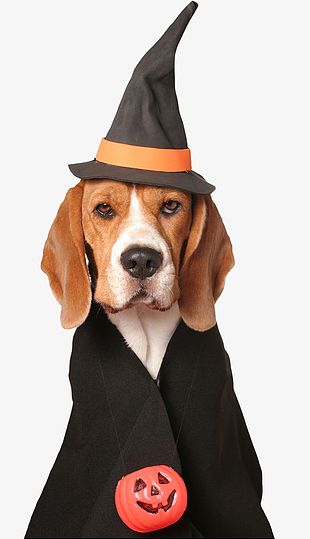 Halloween Puppy PNG