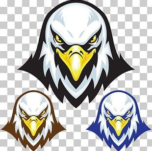 Bald Eagle Stock Illustration Mascot PNG