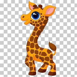 Giraffe Cartoon Drawing PNG