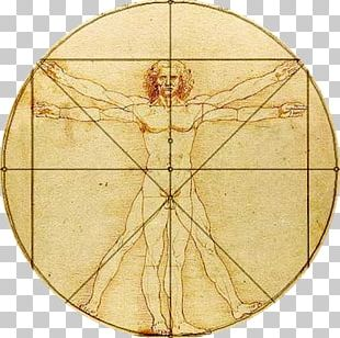 Vitruvian Man Body Proportions Golden Ratio Drawing PNG
