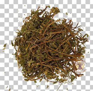 Nilgiri Tea Hōjicha The Incredible Spice Men Green Tea PNG