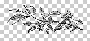 Drawing Visual Arts Flower PNG