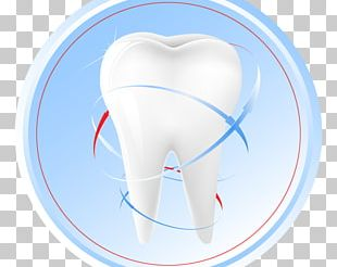Human Tooth Tooth Fairy Dentistry PNG