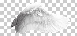 Wing Bird PNG