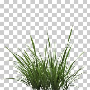 Texture Mapping Drawing Lawn PNG