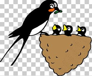 Edible Bird's Nest Barn Swallow Beak Child PNG