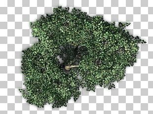 Fruit Tree Plant PNG