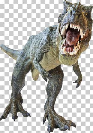 Argentinosaurus Dinosaur Size Tyrannosaurus Rex Stock Photography PNG