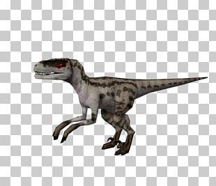 Velociraptor Jurassic Park: Operation Genesis Jurassic World Evolution Tyrannosaurus YouTube PNG